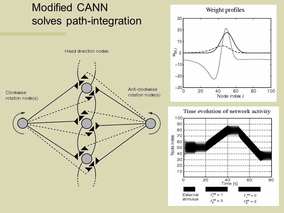 Modified CANN solves path-integration