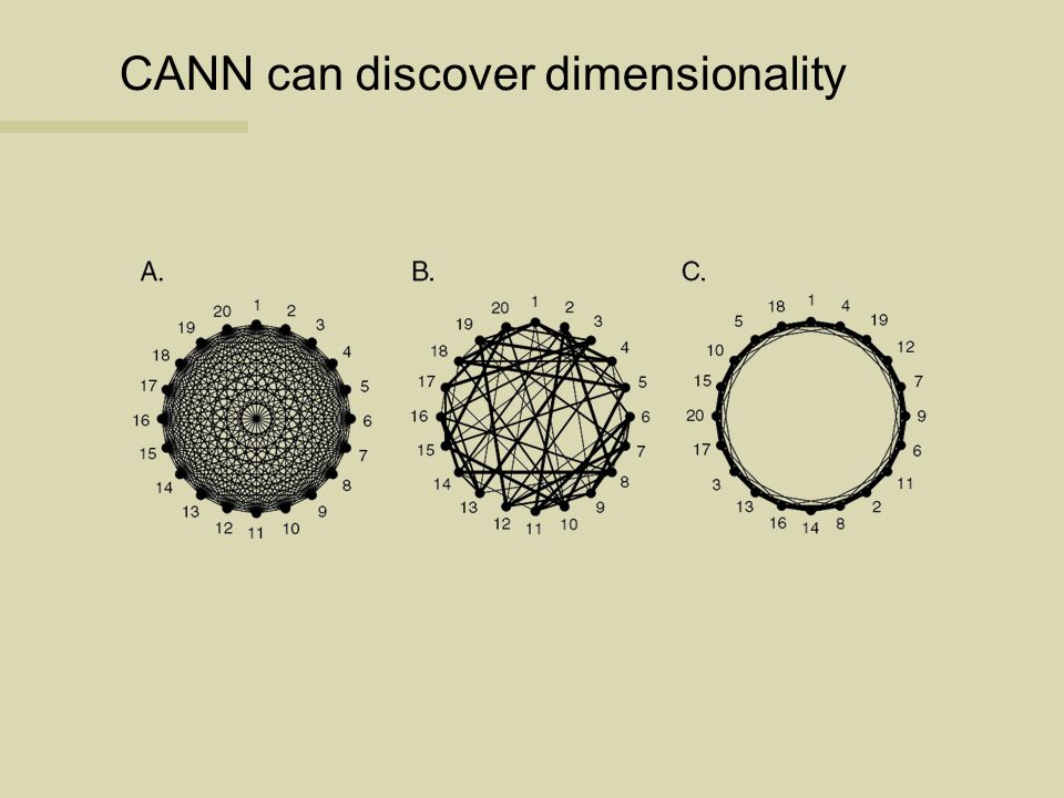 CANN can discover dimensionality