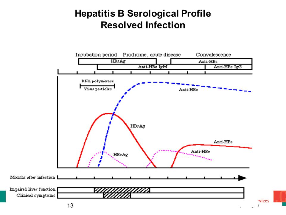 Hepatitis B Serological Profile