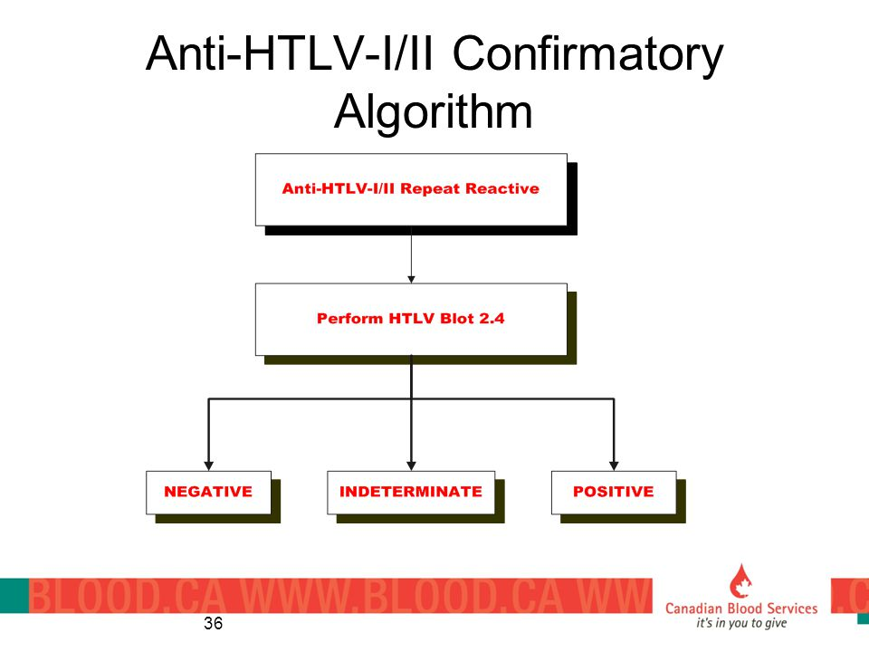 Anti-HTLV-I/II Confirmatory Algorithm