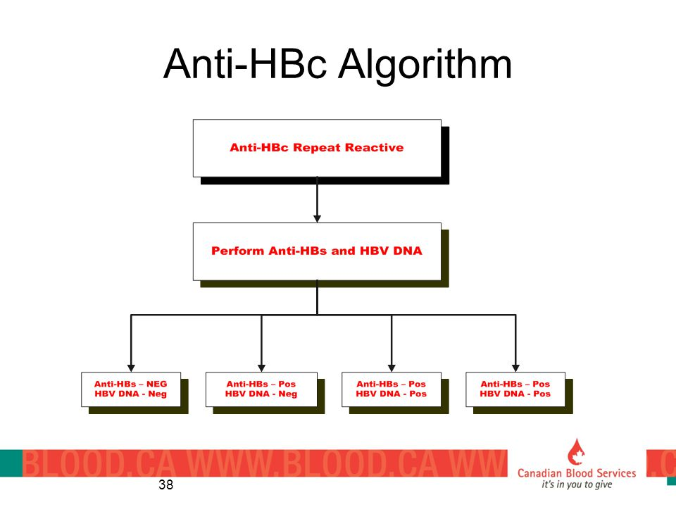 Anti-HBc Algorithm 38
