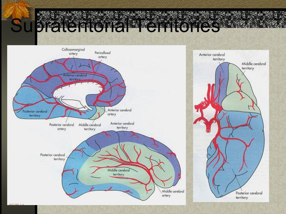 Supratentorial Territories