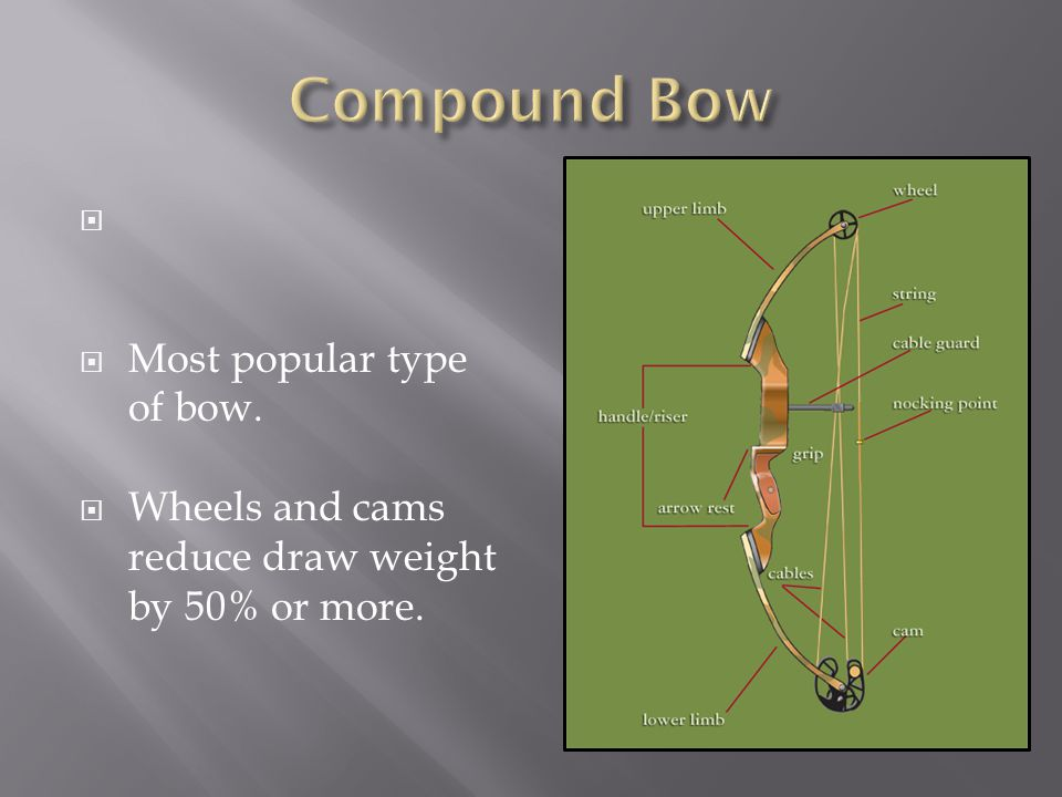 Compound Bow Most popular type of bow.