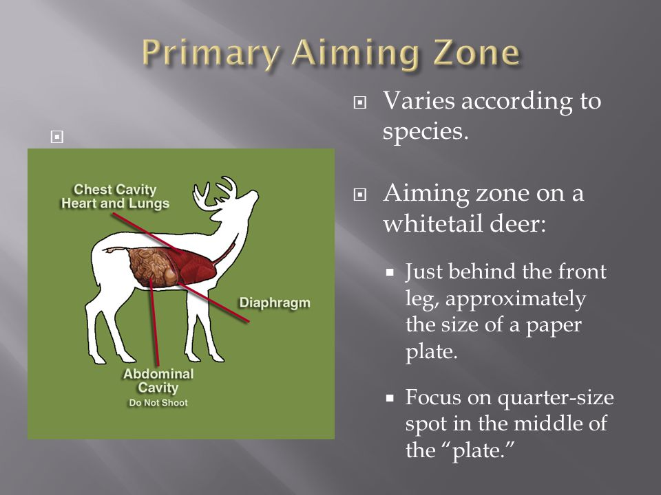 Varies according to species. Aiming zone on a whitetail deer:
