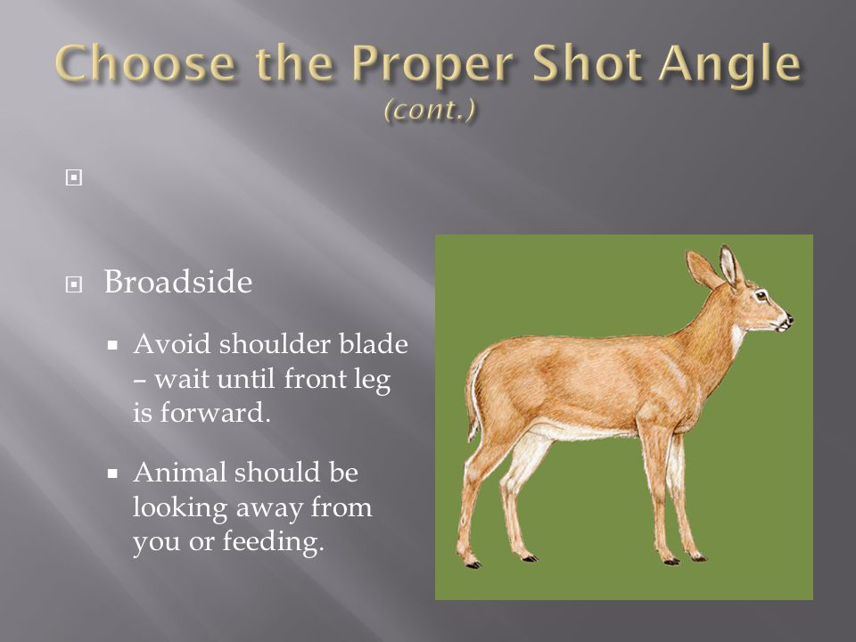 Choose the Proper Shot Angle (cont.)