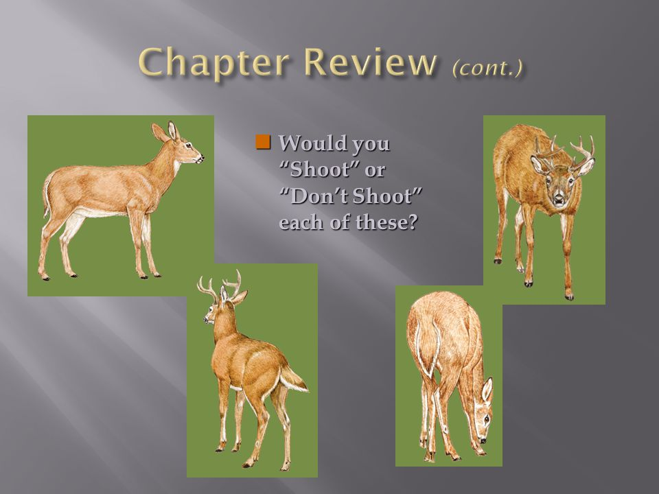 Chapter Review (cont.) Would you Shoot or Don't Shoot each of these