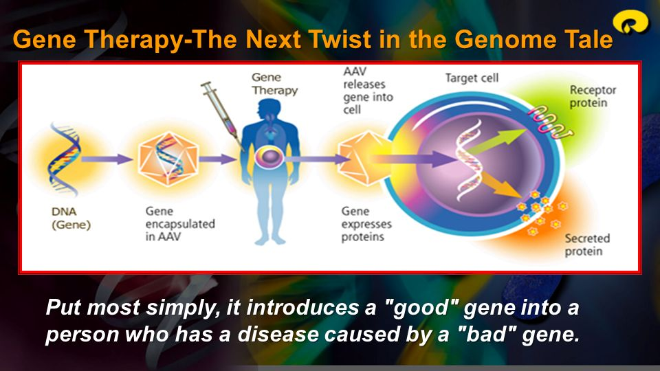 Gene Therapy-The Next Twist in the Genome Tale