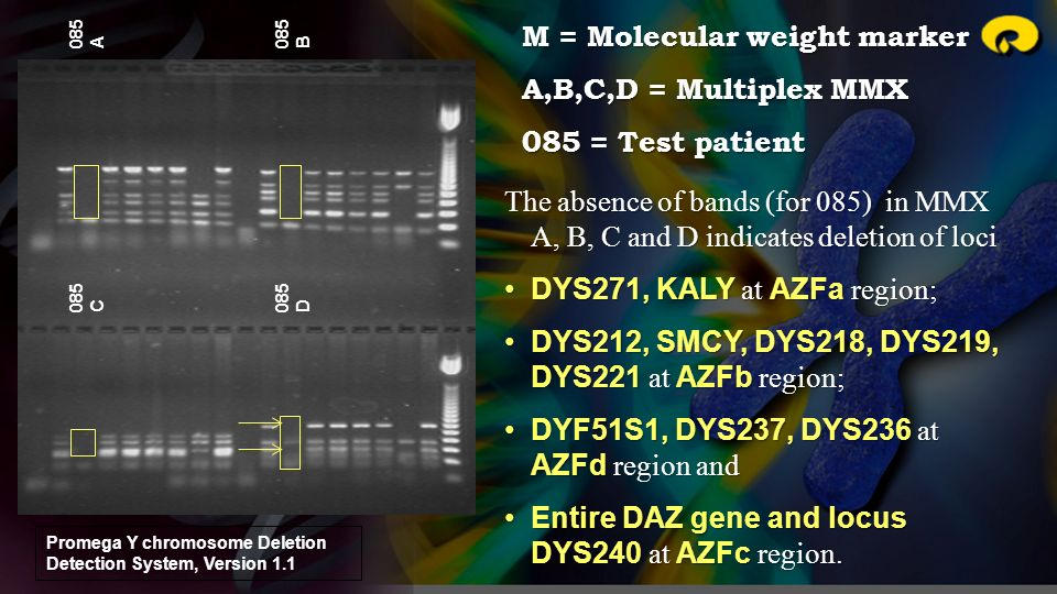 M = Molecular weight marker A,B,C,D = Multiplex MMX 085 = Test patient