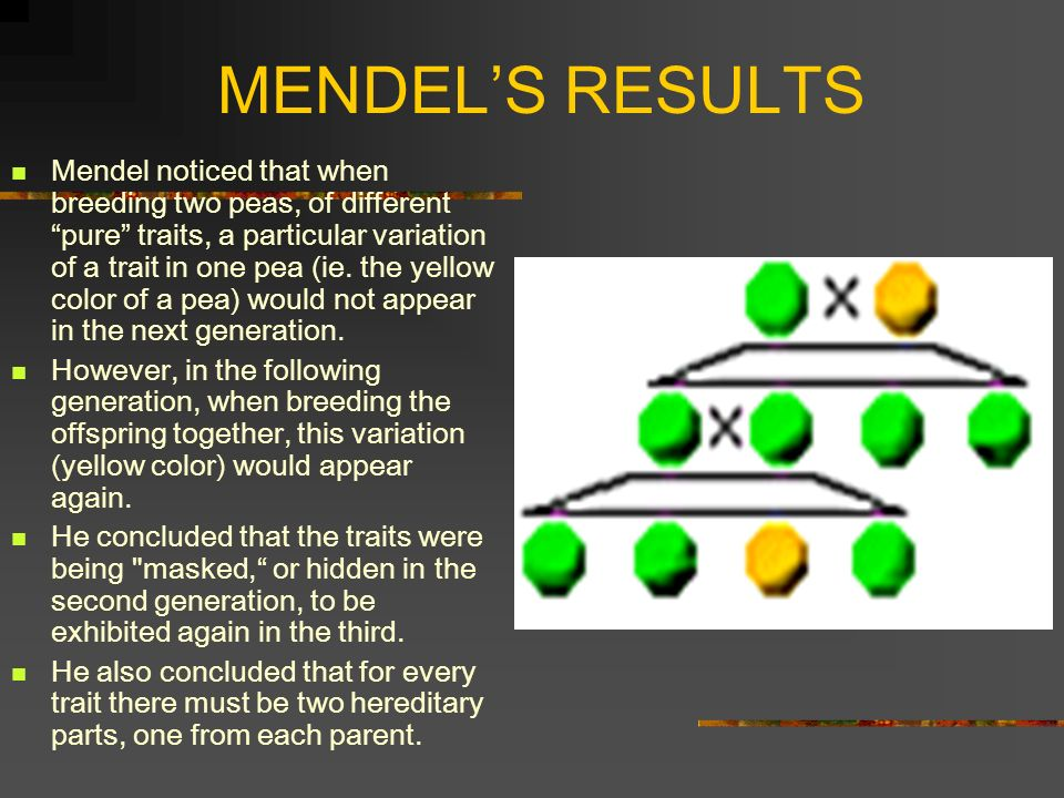 MENDEL'S RESULTS