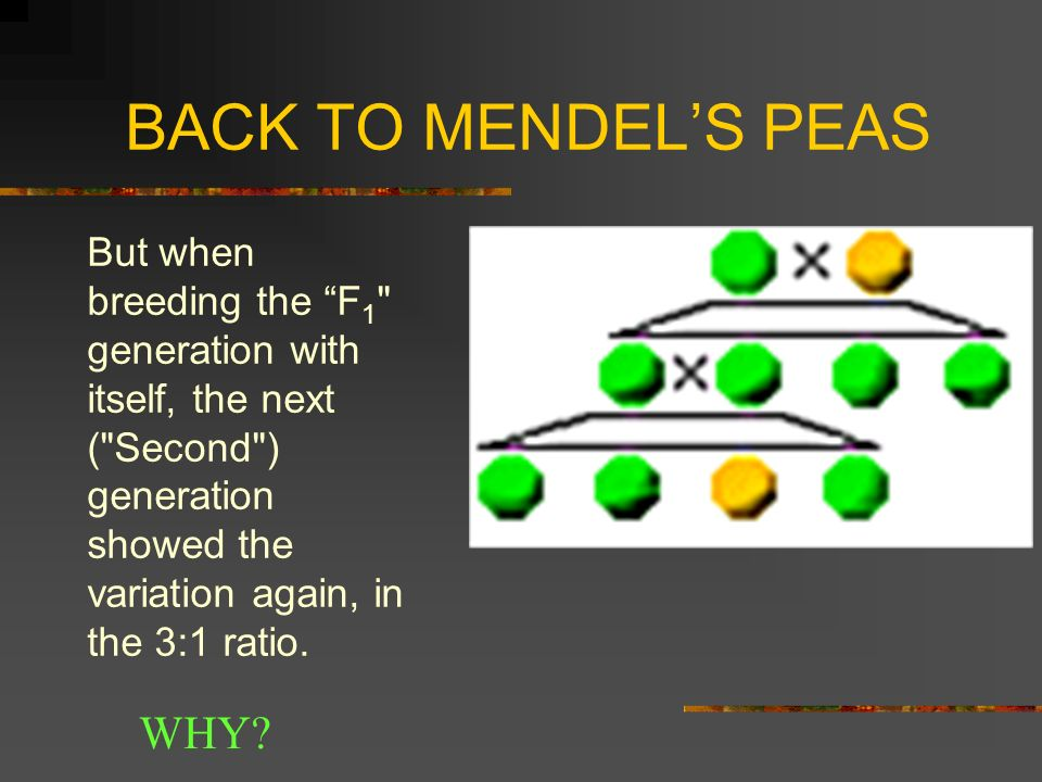 BACK TO MENDEL'S PEAS WHY