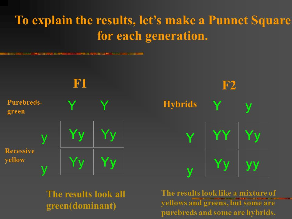 To explain the results, let's make a Punnet Square
