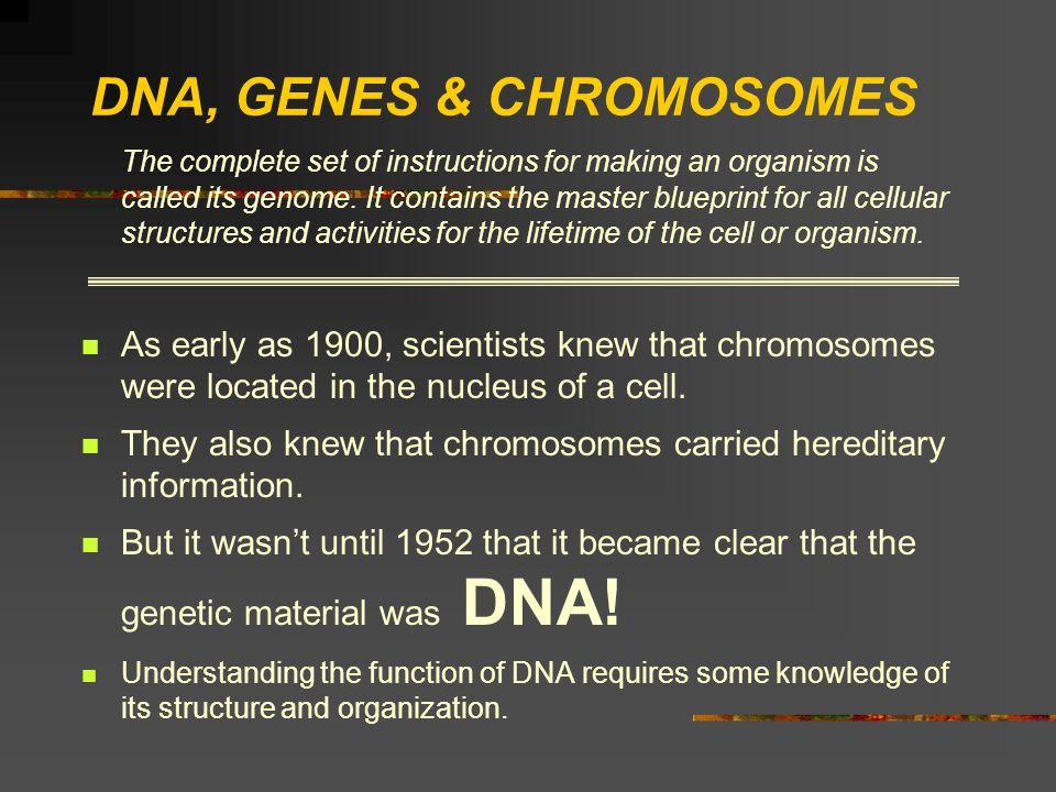DNA, GENES & CHROMOSOMES