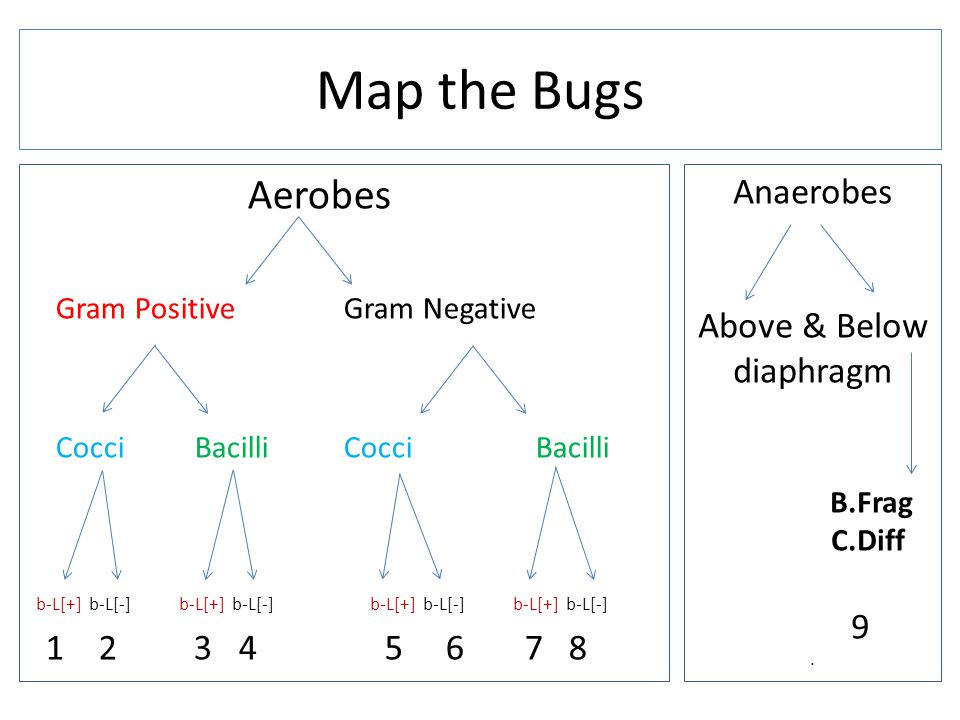 Map the Bugs Aerobes Anaerobes Above & Below diaphragm 9
