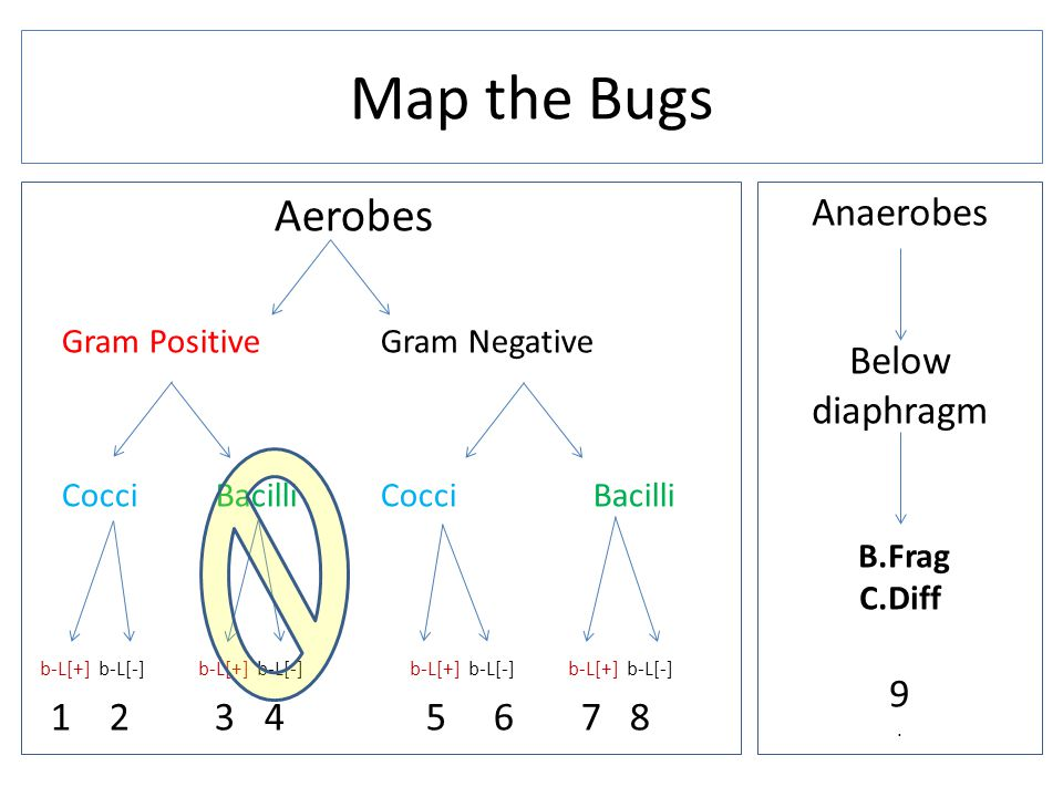 Map the Bugs Aerobes Anaerobes Below diaphragm 9 1 2 3 4 5 6 7 8