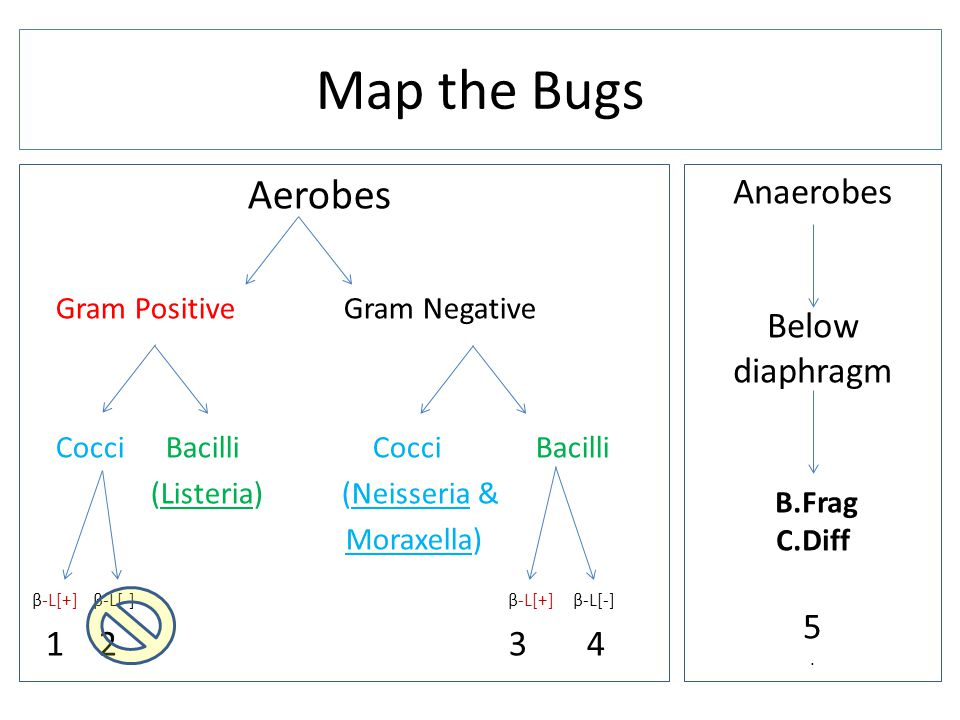 Map the Bugs Aerobes Anaerobes Below diaphragm 5 1 2 3 4