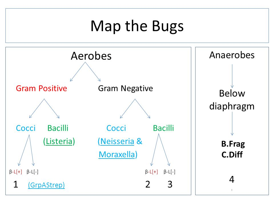 Map the Bugs Aerobes Anaerobes Below diaphragm 4 1 (GrpAStrep) 2 3