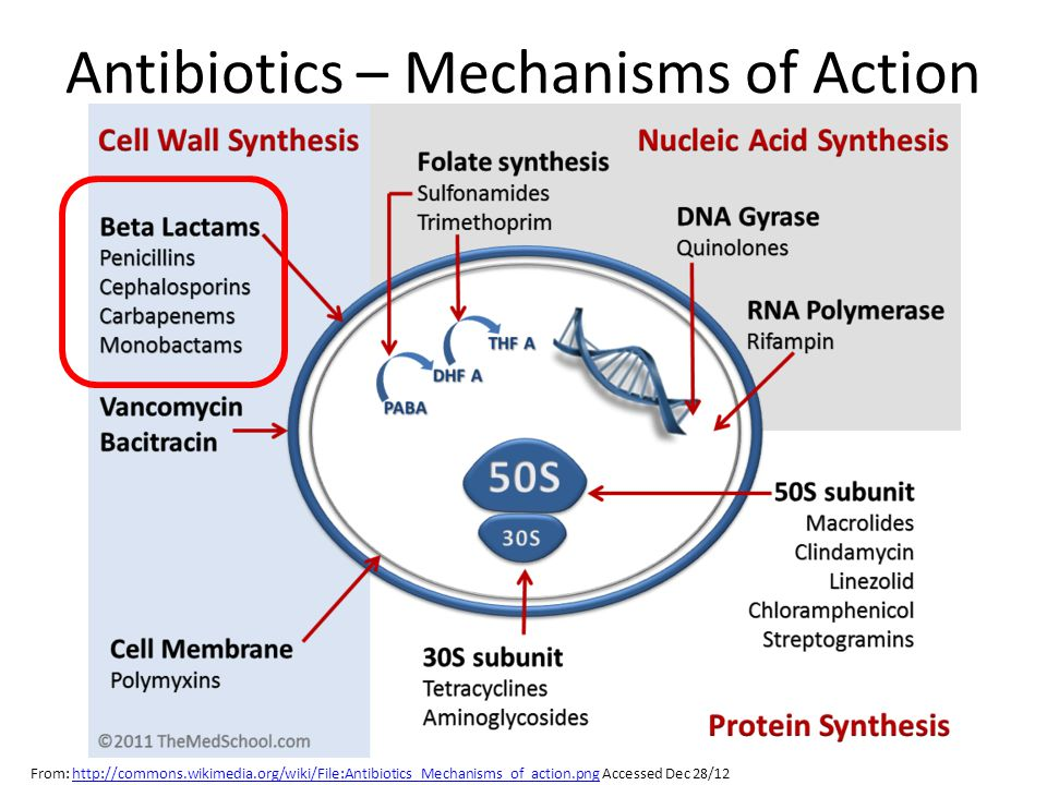 Antibiotics – Mechanisms of Action
