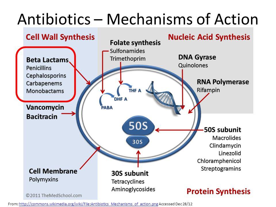 Antibiotics – Mechanisms of Action