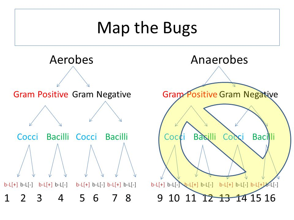 Map the Bugs Aerobes Anaerobes 1 2 3 4 5 6 7 8 9 10 11 12 13 14 15 16