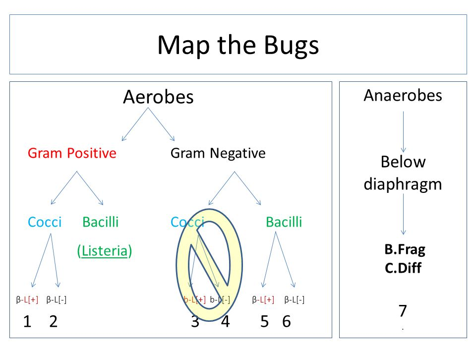 Map the Bugs Aerobes (Listeria) Anaerobes Below diaphragm 7