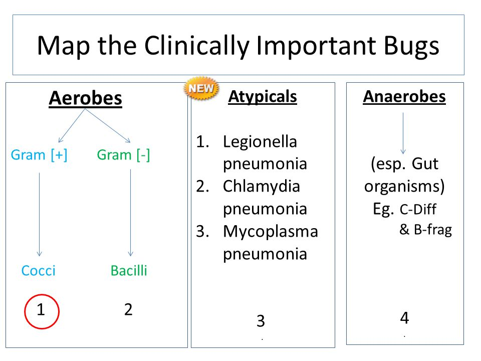 Map the Clinically Important Bugs