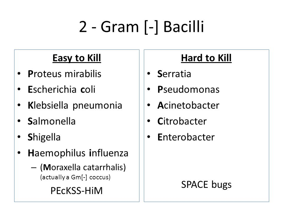 2 - Gram [-] Bacilli Easy to Kill Proteus mirabilis Escherichia coli