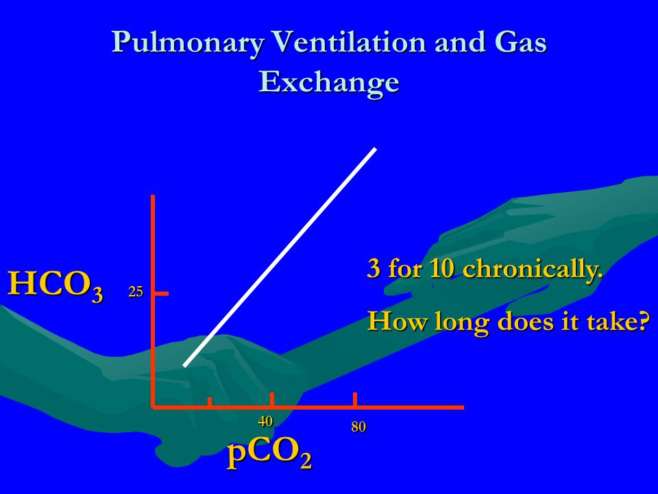 Pulmonary Ventilation and Gas Exchange