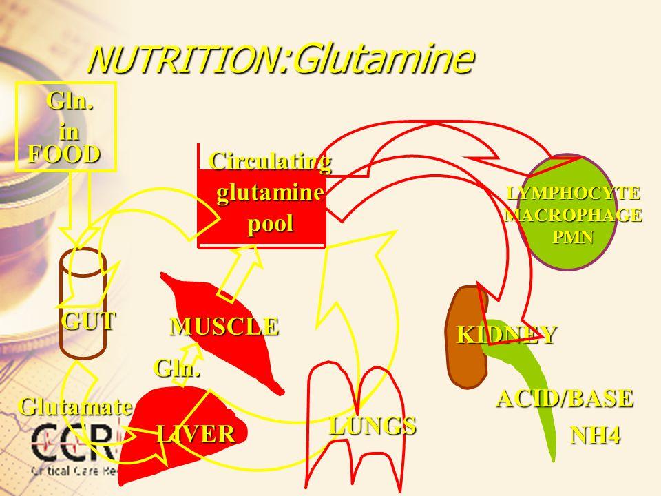 Circulating glutamine pool LYMPHOCYTE MACROPHAGE PMN