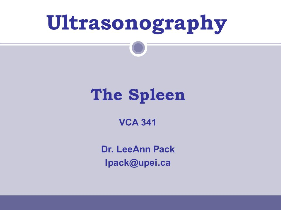 Ultrasonography The Spleen VCA 341 Dr. LeeAnn Pack lpack@upei.ca