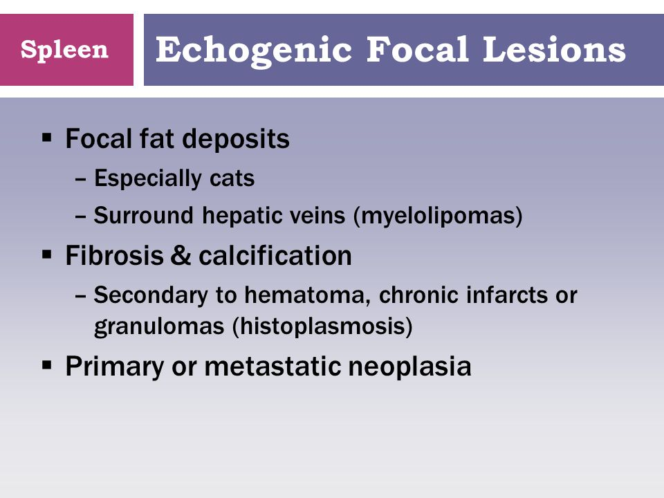 Echogenic Focal Lesions