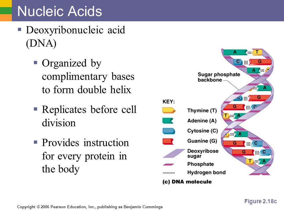 Nucleic Acids Deoxyribonucleic acid (DNA)