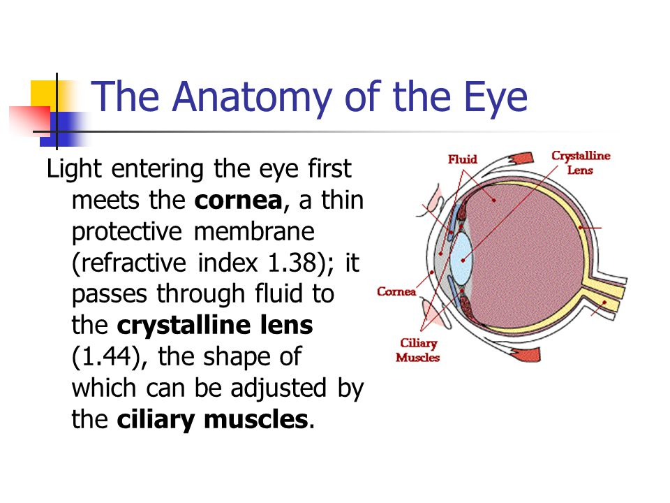 The Anatomy of the Eye
