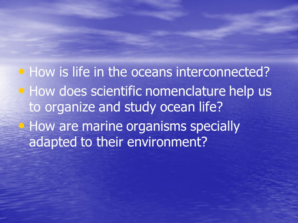 How is life in the oceans interconnected