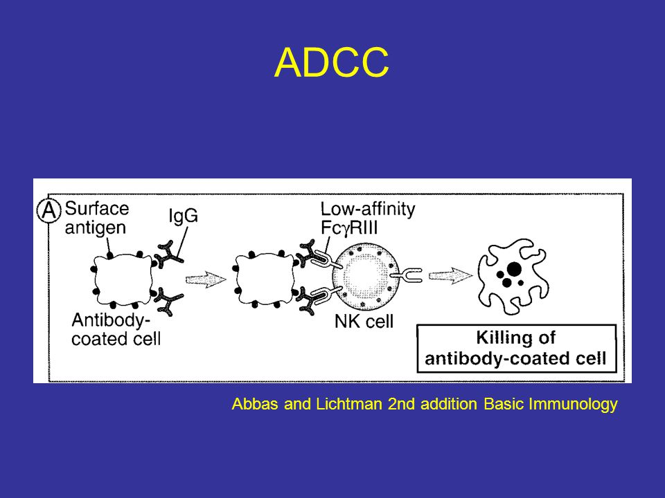 ADCC Abbas and Lichtman 2nd addition Basic Immunology
