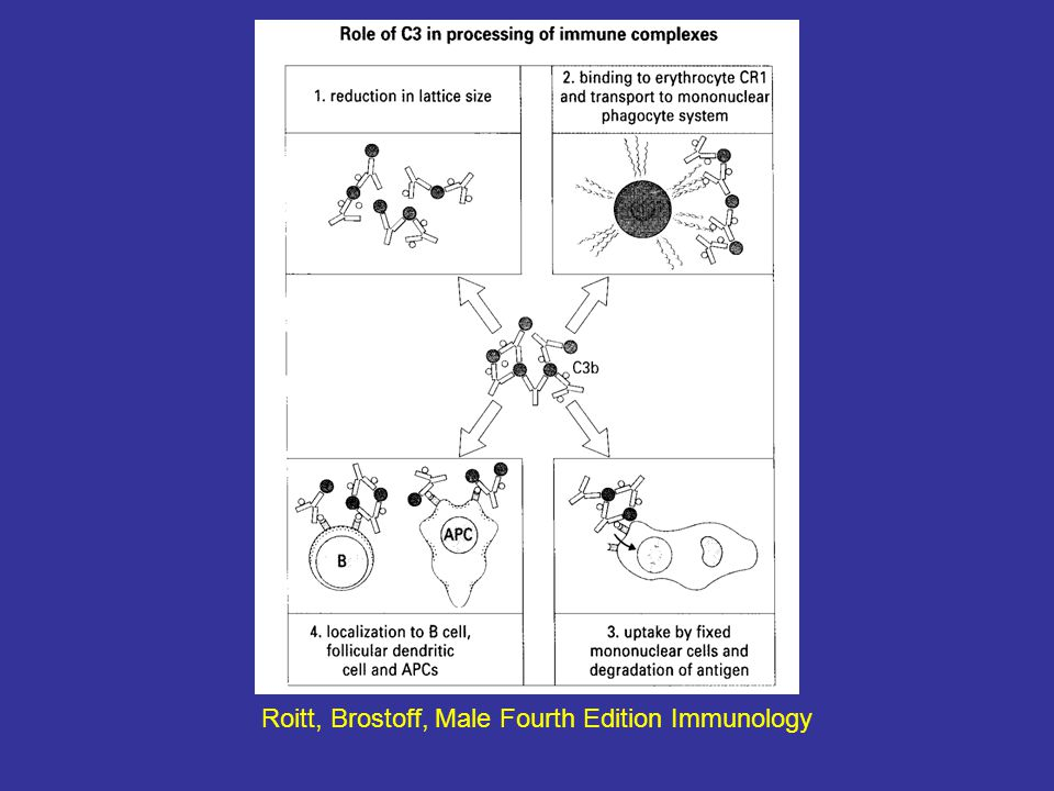 Roitt, Brostoff, Male Fourth Edition Immunology