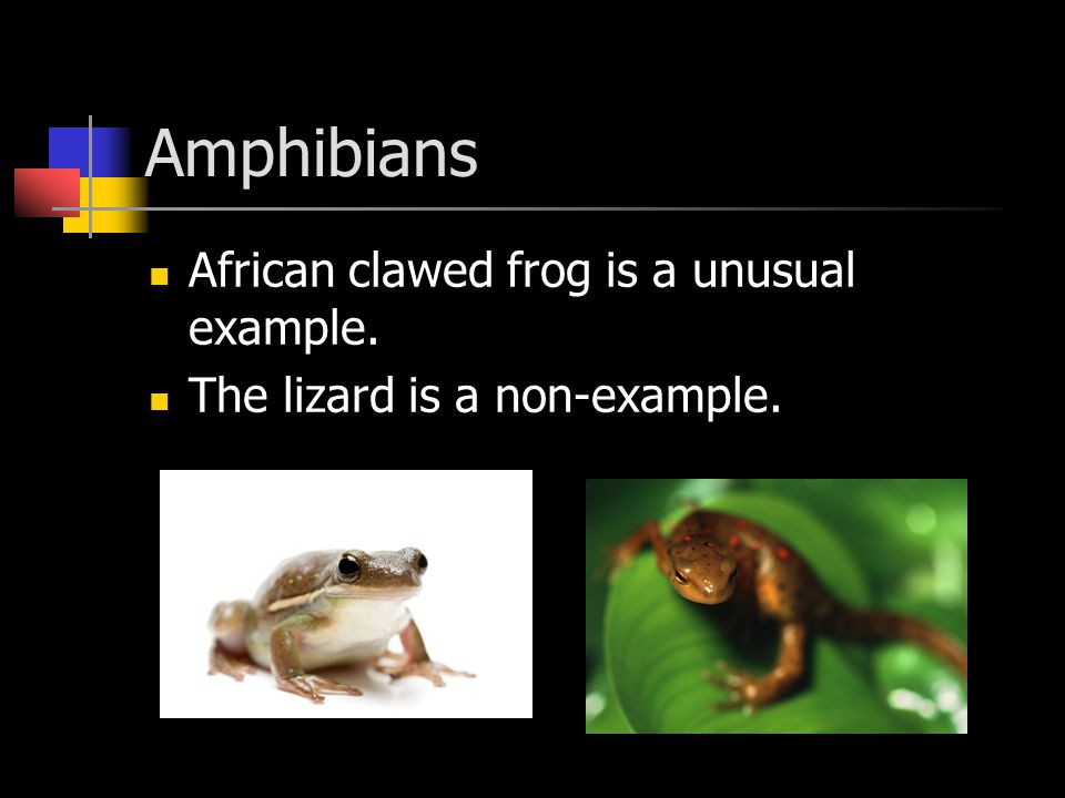 Amphibians African clawed frog is a unusual example.