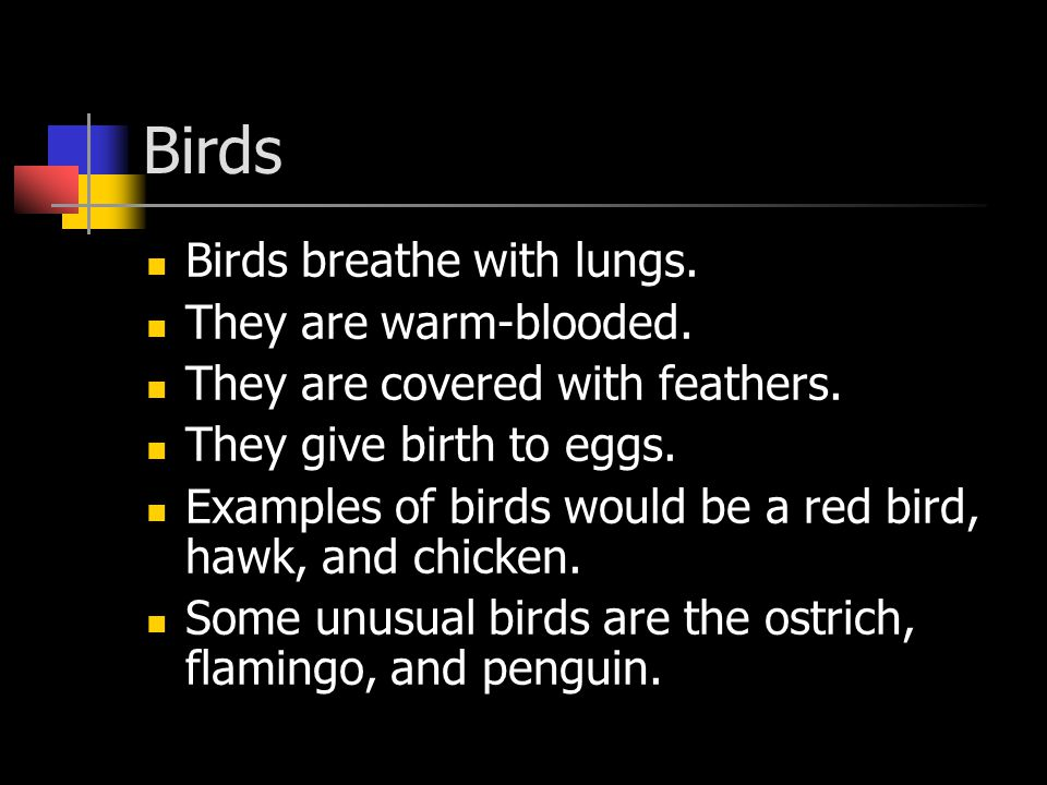 Birds Birds breathe with lungs. They are warm-blooded.
