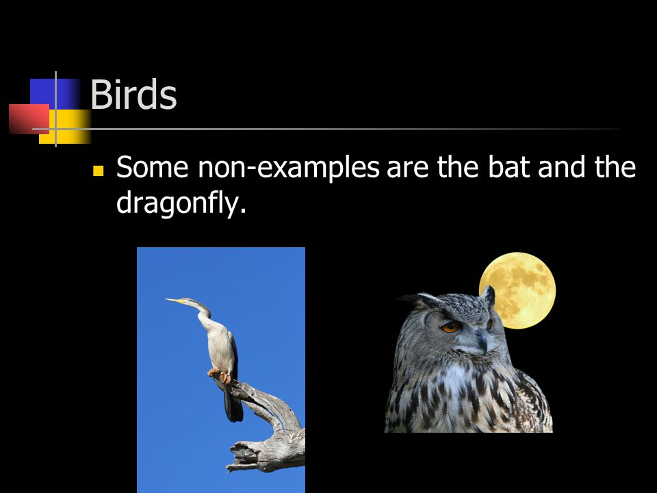 Birds Some non-examples are the bat and the dragonfly.