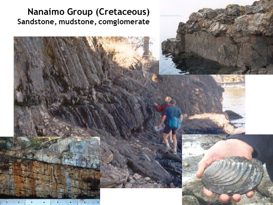 Nanaimo Group (Cretaceous) Sandstone, mudstone, comglomerate