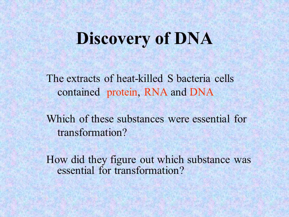 Discovery of DNA The extracts of heat-killed S bacteria cells