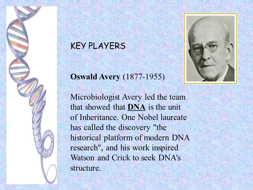 KEY PLAYERS Oswald Avery (1877-1955) Microbiologist Avery led the team. that showed that DNA is the unit.