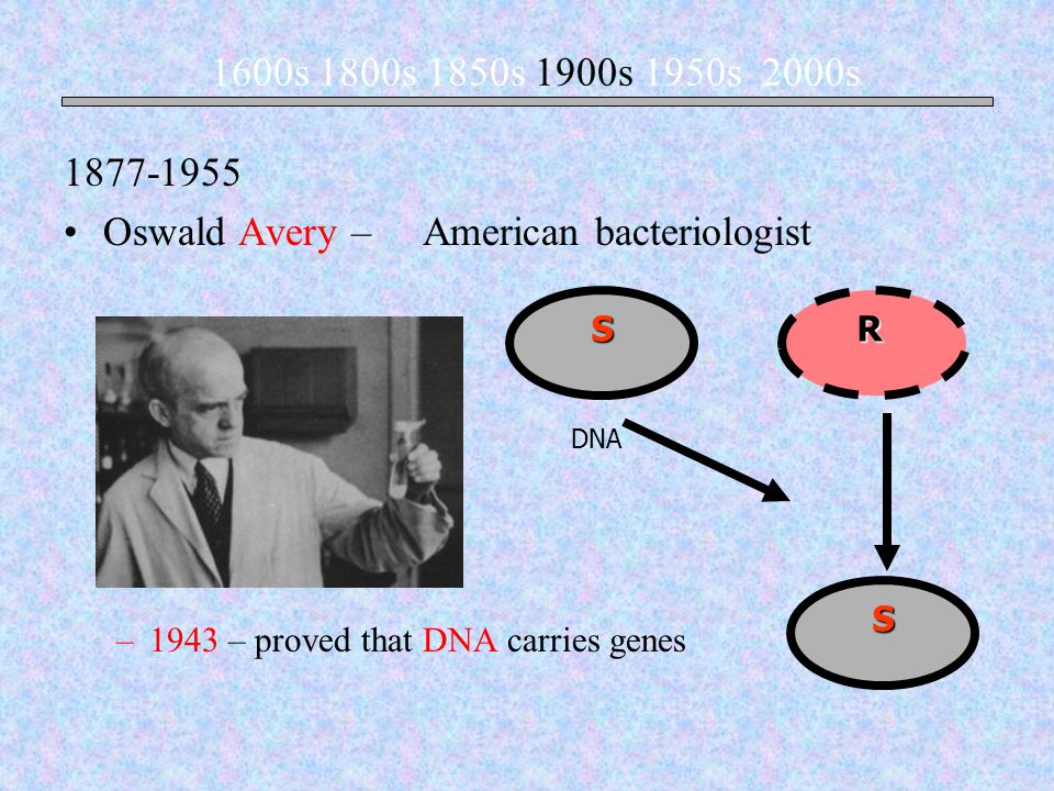 Oswald Avery – American bacteriologist