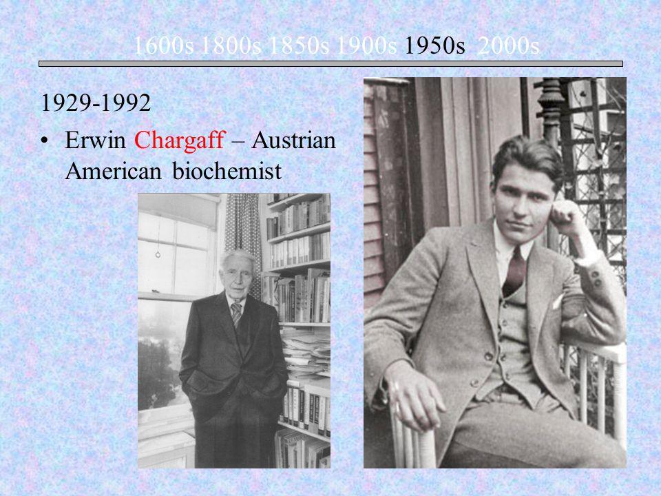 Erwin Chargaff – Austrian American biochemist