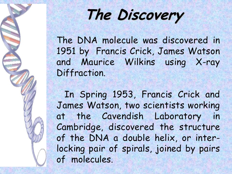 The Discovery The DNA molecule was discovered in 1951 by Francis Crick, James Watson and Maurice Wilkins using X-ray Diffraction.