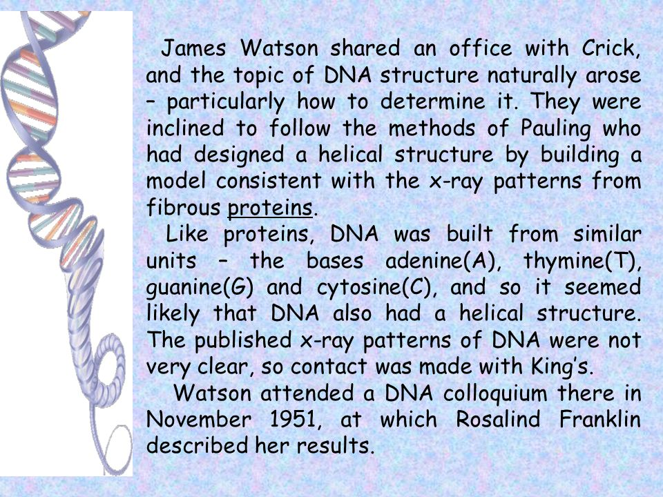 James Watson shared an office with Crick, and the topic of DNA structure naturally arose – particularly how to determine it. They were inclined to follow the methods of Pauling who had designed a helical structure by building a model consistent with the x-ray patterns from fibrous proteins.