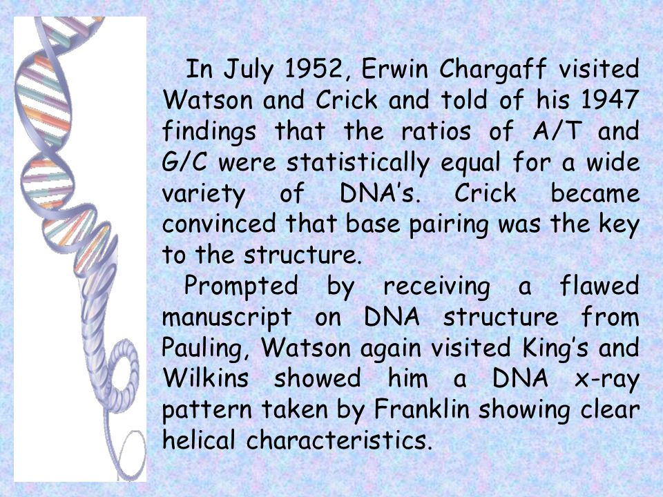 In July 1952, Erwin Chargaff visited Watson and Crick and told of his 1947 findings that the ratios of A/T and G/C were statistically equal for a wide variety of DNA's. Crick became convinced that base pairing was the key to the structure.