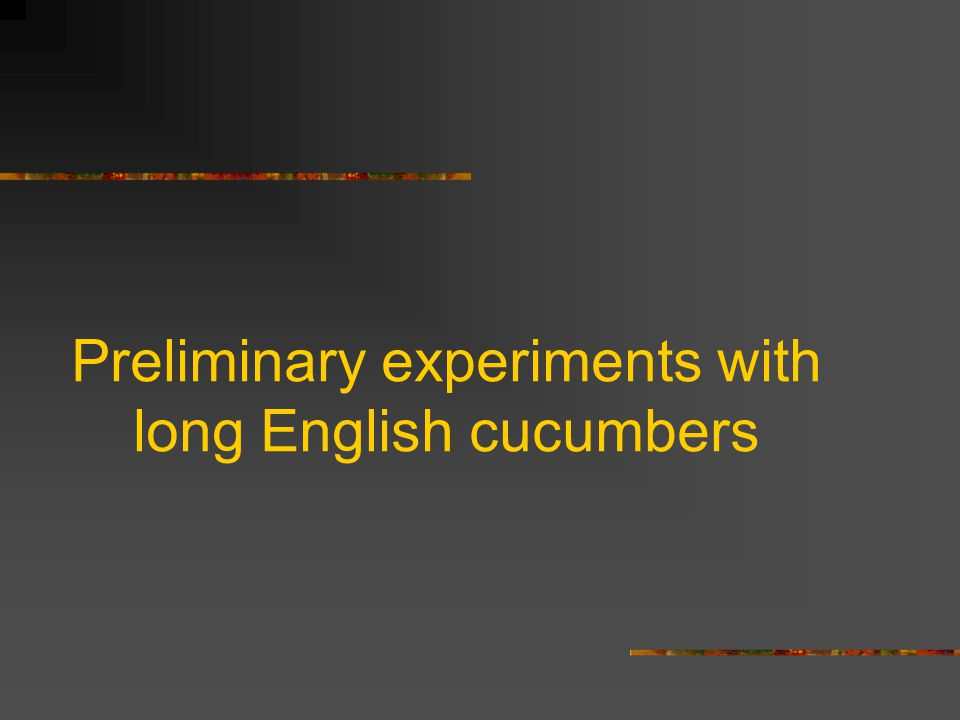 Preliminary experiments with long English cucumbers