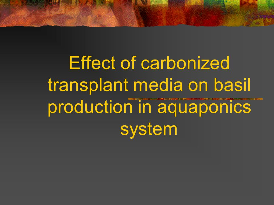 Effect of carbonized transplant media on basil production in aquaponics system