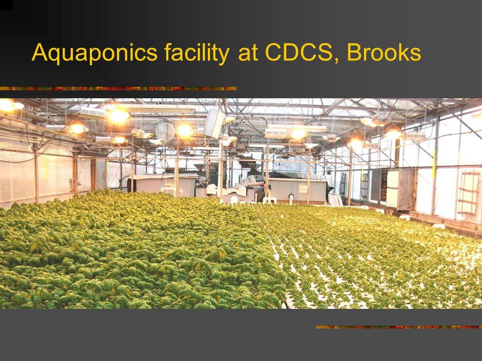 Aquaponics facility at CDCS, Brooks