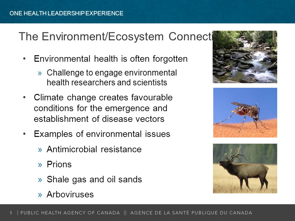 The Environment/Ecosystem Connection